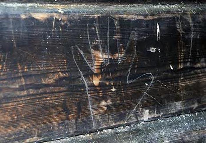 skogfinne symboler
