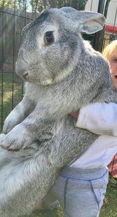 stor kanin